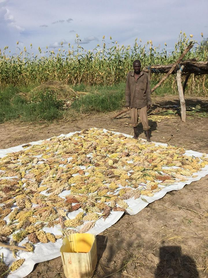 worker drying produce in the field